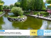 Астанада  ашық аспан астындағы бассейн ашылды