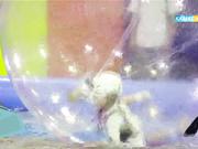 «Шытырманда» кім үздік шығады? Балаларға арналған бағдарламаны бүгін 18:15-те көре аласыздар.