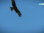 Бүгін 12:30-да «Мәңгілік аспан астында» деректі фильмінің 7-бөлімін көріңіз!