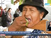Боливия президенті кока алқабын екі есеге кеңейтуге рұқсат берді