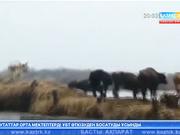 Сырдария өзенінің арнасынан шығуы Қазалы ауданының бірқатар шаруашылығын шығынға ұшыратты
