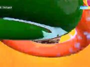 Дүниеге келгеніне 312 күн болған  Жанкерім Бақытжанқызы  бірінші кезеңнің жеңімпазы атанды
