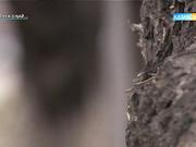 Сабина Рысбекқызы: Анам мені кішкентайымнан тастап кеткені үшін айыптаймын