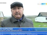 Алматы облысының Ескелді ауданының Өрқусақ ауылында мал қырылуда