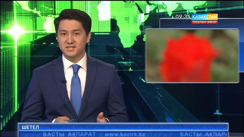 Маңғыстауда «Президент Назарбаев» деп аталатын қызғалдақ өсіріліп жатыр