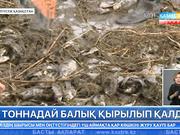 Солтүстік Қазақстан облысында 6 тоннаға жуық балық қырылып қалды.