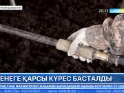 Оңтүстік Қазақстан облысында кенеге қарсы күрес басталды