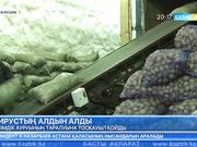 Фитосанитарлық қауіпсіздік жөніндегі мемлекеттік инспекция аса қауіпті өсімдік ауруының таралуына тосқауыл қойды