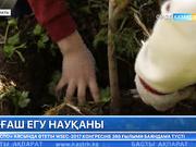 Іле-Алатау мемлекеттік ұлттық табиғи паркі қызметкерлері «Өз ағашыңды отырғыз» науқанын өткізді