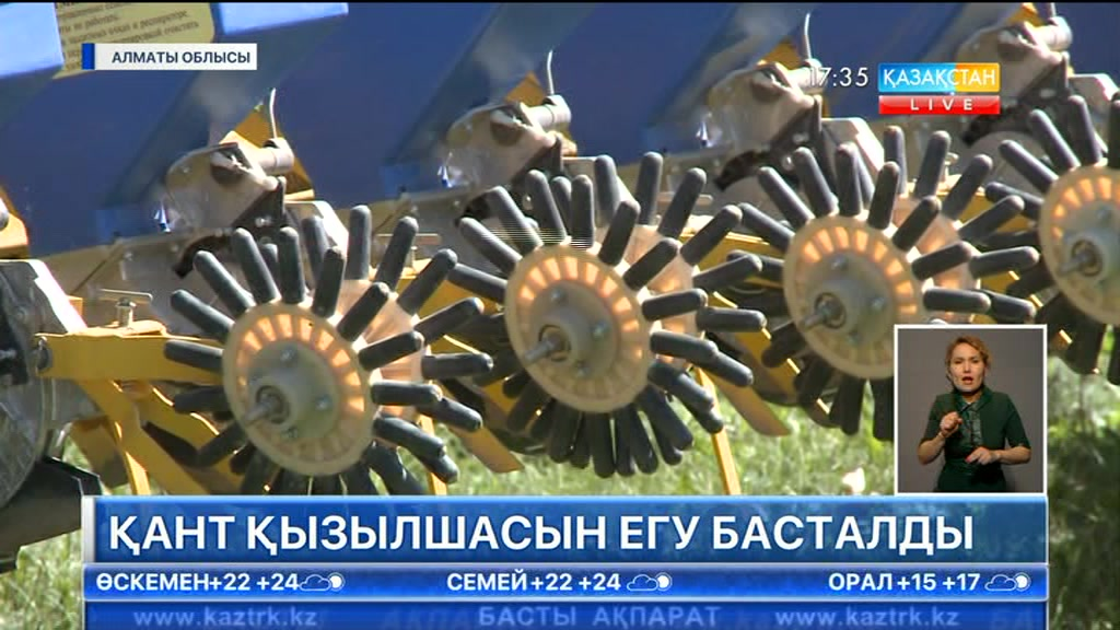 Алматы облысында қант қызылшасын егу басталды