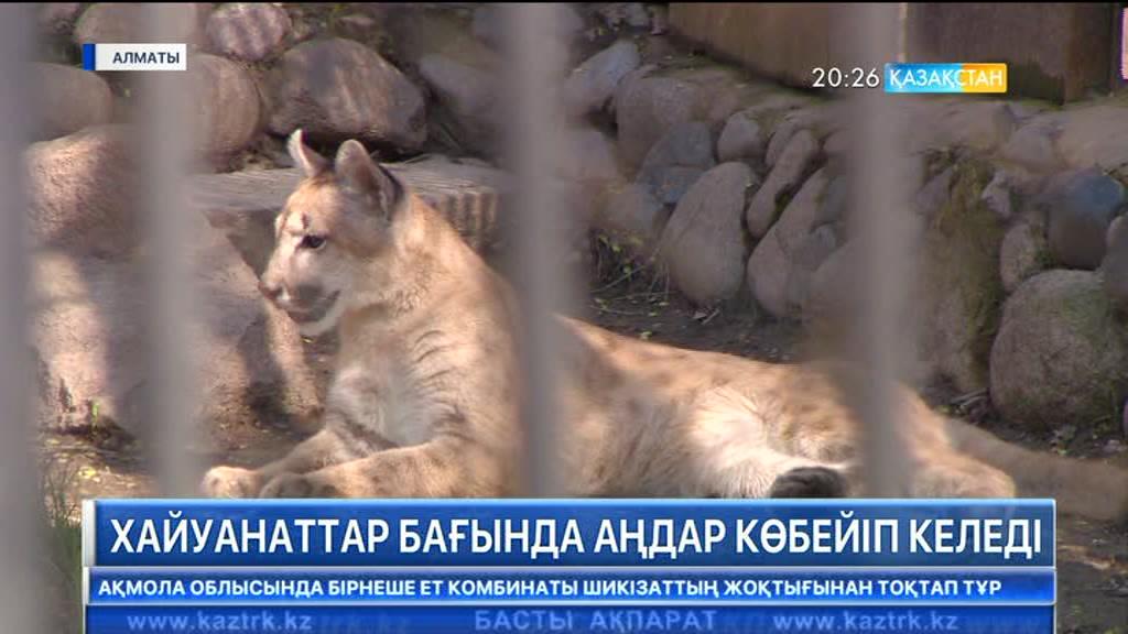 Алматыдағы хайуанаттар бағында аңдар көбейіп келеді