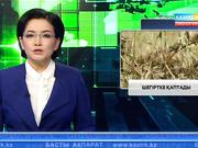 Жамбыл облысы аумағындағы жайылымдарды шегіртке басты