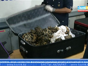 Малайзия астанасында Қызыл кітапқа енген 330 тасбақа тәркіленді