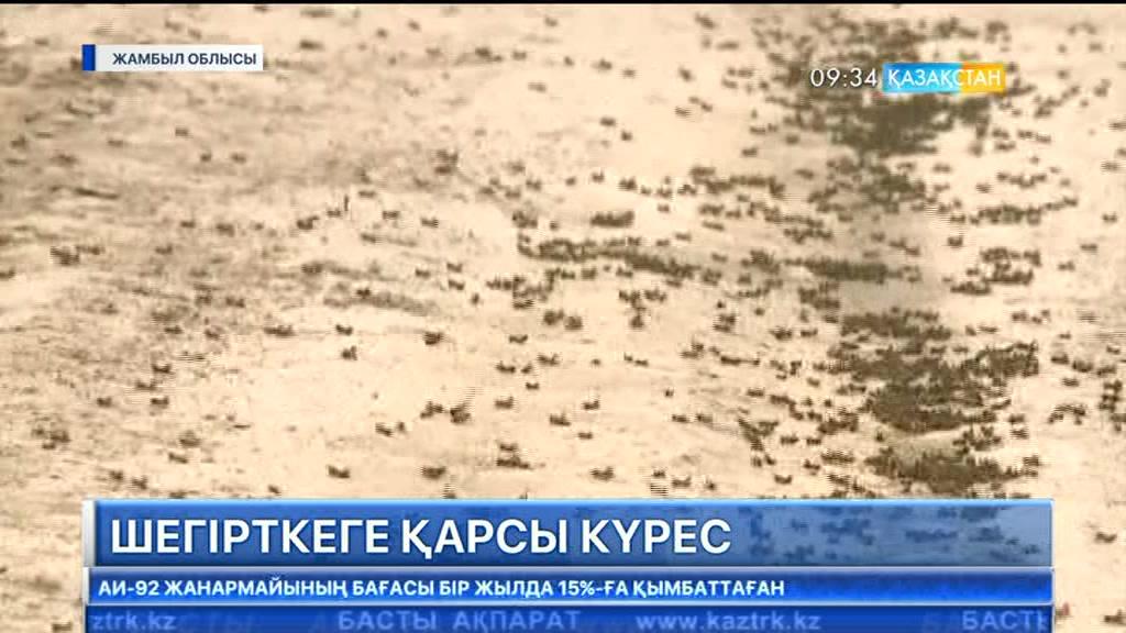 Жамбыл облысында марокко шегірткесіне қарсы күрес жұмыстары жалғасып жатыр