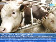 Жамбыл облысында 25 ауылшаруашылығы кооперативі құрылады