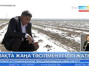 Оңтүстік Қазақстан облысы Шардара ауданының диқандары мақтаны биыл жаңа тәсілмен егуге кірісті