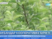Жамбыл облысында бағбандар кооперативке бірікті