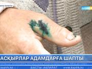 Алматы облысының Райымбек ауданында екі малшы арланның шабуылынан жарақаттанды