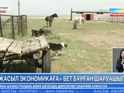 Павлодарлық кәсіпкер шаруашылығын толықтай «жасыл экономикаға» көшірмек