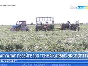 Оңтүстікқазақстандық шаруалар Ресейге 100 тонна қарбыз экспорттады