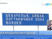 Ресей азаматы Қазақстан шекарашыларын мал ұрлады деп айыптап отыр