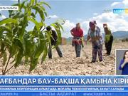 Алматы облысының Ұйғыр ауданында биыл 1 мың 80 гектар аумаққа бау-бақша өнімдерін екті