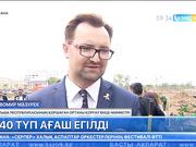 Астана күніне орай польшалықтар елордада 240 түп ағаш отырғызды
