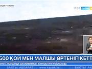 Қостанай облысында 1500 қой мен малшы өртеніп кетті