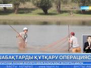 Атырау облысында еріктілер шабақтарды қырылып қалудан құтқарды