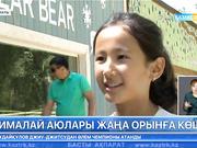 Алматының зообағындағы гималай аюлары жаңа орынға көшті