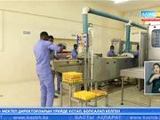 Нигерияда фабрика пісірілген жұмыртқа сата бастады