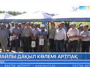 Алматы облысының диқандары жүгері алқаптарын кеңейтуді көздеп отыр