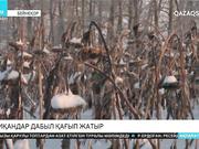 Шығысқазақстандық диқандар дабыл қағып жатыр