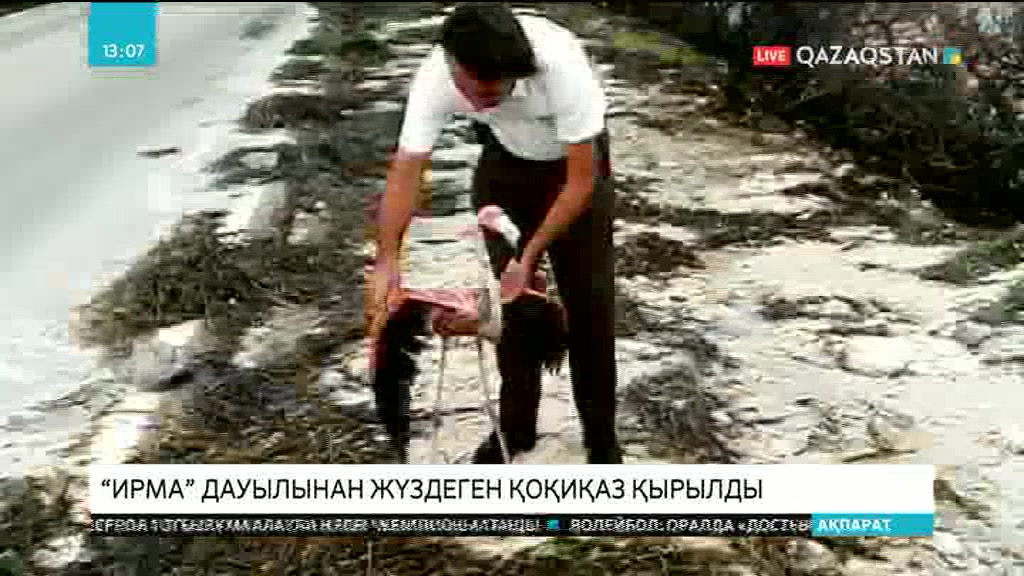 Кубаның солтүстігінде «Ирма» дауылы кесірінен жүздеген қоқиқаз қырылып қалды