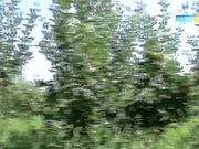 «Агробизнес». Қант бағасы қашан тұрақтанады?