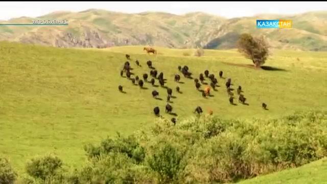 «Агробизнес». Бау-бақша өнімдерін жинау науқаны (01.09.2016)