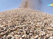 Қазақстан биыл қанша тонна астық жинайды?