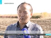 Қытайлық орманшылар Астана іргесіндегі жасыл белдеуге жаңа ағаш түрлерін әкеледі