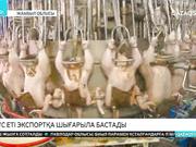 Жамбыл облысында құс еті экспортқа шығарыла бастады.