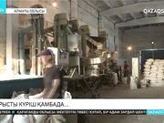 Алматы облысында күріш ору науқаны қарқын алды