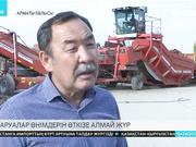 Алматы облысында шаруалар қант қызылшасын өткізе алмай дал