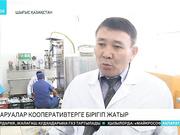 Шығыс Қазақстанда шаруалар кооперативтерге бірігіп жатыр