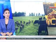 08:00 жаңалықтары (18.10.2016)