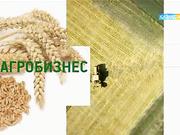 «Агробизнес». Бордақылау алаңы нарыққа ет шығарды