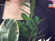 «Бірге таңдаймыз». Үй өсімдіктерін таңдау және пайдасы туралы не білесіз?