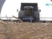 2 қараша 19:05-те «Агробизнес» бағдарламасы Қызылорда облысының  тұқым шаруашылығы науқанына шолу жасайды