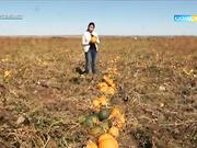 Тұқым шаруашылығы (Қызылорда облысы). Агробизнес