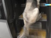 «Ақсауыт» әскери-патриоттық бағдарламасы «Обаған» шекара бақылау бөлімшесінің қызметімен танысты