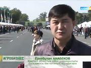 Агробизнес. Қызылорда облысының әлеуеттік жағдайы