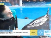 «Таңшолпан». Дельфиндерді қолға үйретудің ерекшеліктері